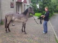 2012 Tess met konik paardje Luka