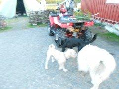 Zondag 16 aug. 2015 eindelijk Mariahemelvaartsdag Suolovuopmi Fjellstua 18 km